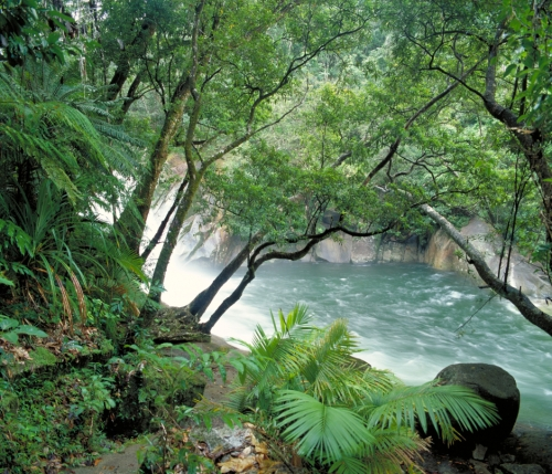 Photo: Wet Tropics Images
