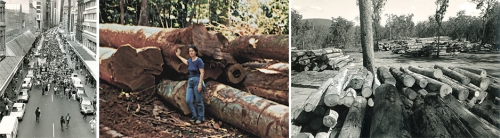 Rainforest rally, Melbourne;  Logging at Downey Creek; Log dump, Windsor Tableland
