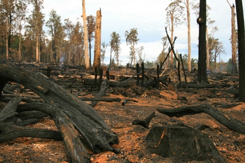 Logging at Brown Mountain, East Gippsland Photo: Environment East Gippsland
