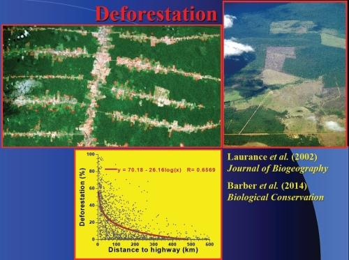DeforestationImage.jpeg