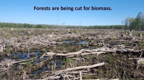 ForestCutForBiomass.jpg