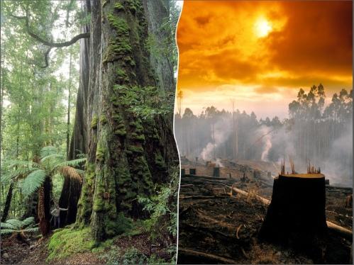 LoggingImage